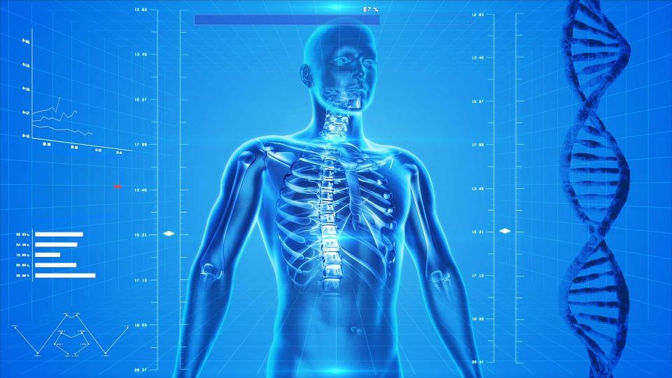 Funciones del agua en nuestro cuerpo - Fuentes de Agua